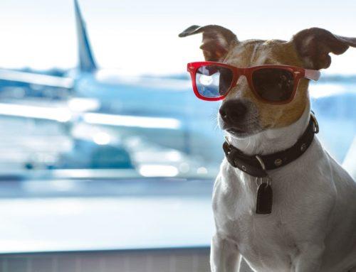 Novas restrições para entrada de cães nos EUA: saiba o que isso significa para trazer seu animalzinho
